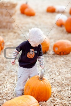 toddler and pumpkin