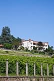 Italian charming villa in vineyard