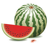 vector watermelon and a slice