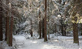 Path crossing snowy forest