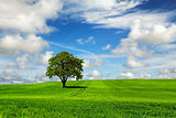 Tree and green landscape