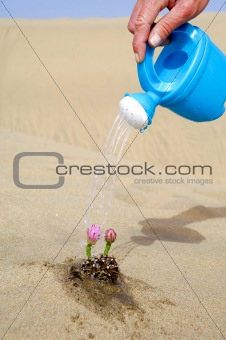Watering a cactus