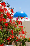 Geranium flowers with church background in Santorini
