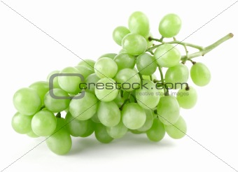 branch of ripe green grapes