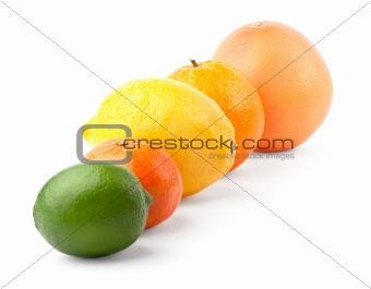Citrus in row