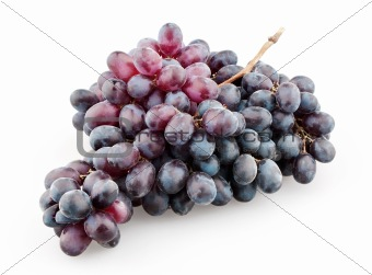 Branch of black grapes