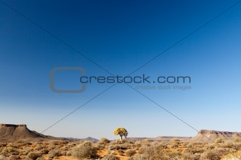 Dry landscape in South Africa