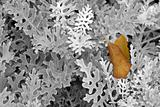 Yellow leaf on the bush
