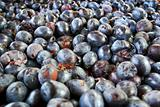 A bunch of plums