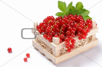 Wooden crate with red currant