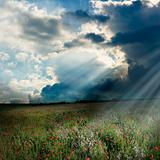 Poppy field with god rays
