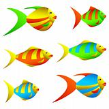 Colorful fish.