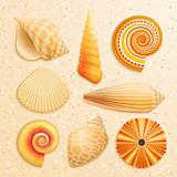 Seashell collection on sand background