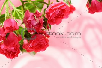 Bouquet of small roses.