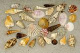 Shell collection in sand