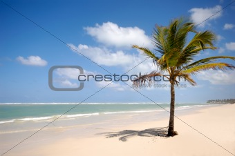 Caribbean beach with palm and white sand
