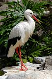 Stork in nature