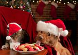 Cat and Dog devouring Santa&#39;s cookies and milk