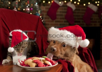 Cat and Dog devouring Santa's cookies and milk