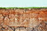 Cliff - clay soil and grass