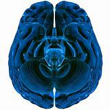 Brain - 3D Max Render