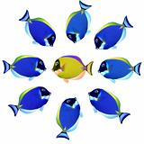 School of Exotic Fishes