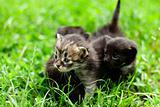 little kitten who walks on the light green grass