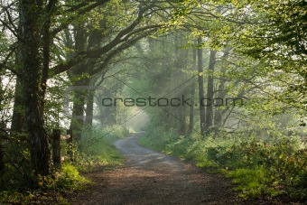 Countryside track in early morning sunlight