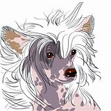 vector dog Chinese Crested breed