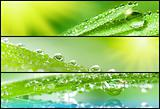 Banners - Grass with dewdrops