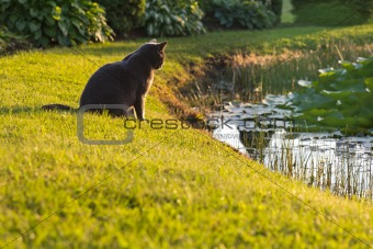 Cat on grass looking to the water