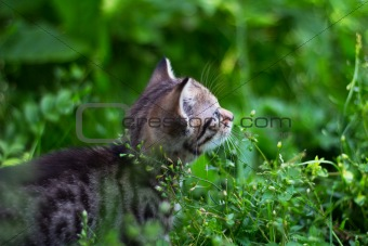 Kitty looking up behind the grass