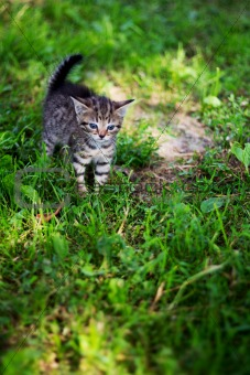 Kitty looking frighten on the loan