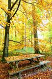 Picnic place in the autumn forest