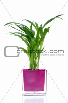 Houseplant