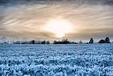 Sunset over a frozen field