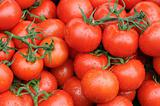 Branches of tomato