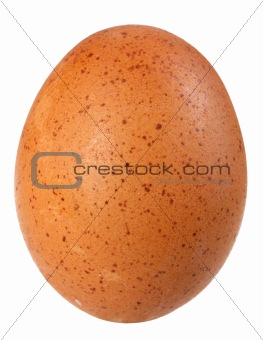 Only single brown bird egg