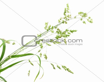 Background with single branch of green grass