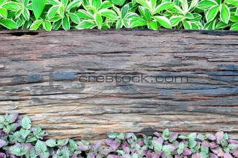 old wooden and plant