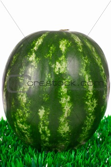 watermelon on the grass
