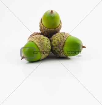 Three Green Acorns