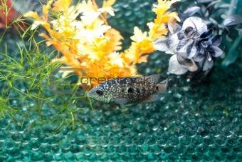 Gray fish and glass balls