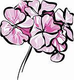 rosebud geranium
