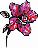 rose five petals on a stem