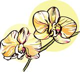 two orchid with a yellow middle