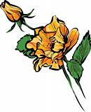 ORANGE big and small  rose buds