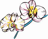 orchids with yellow center and pale pink petals