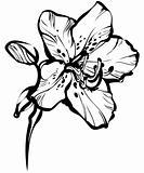 five petals on a stem