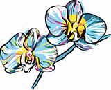 two orchids with yellow center and blue petals
